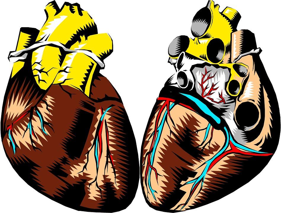 heart-2183439_960_720.jpg