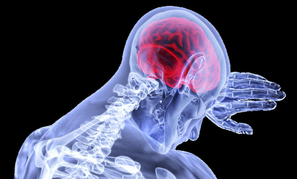 brain-3168269_1280-1200x723.png