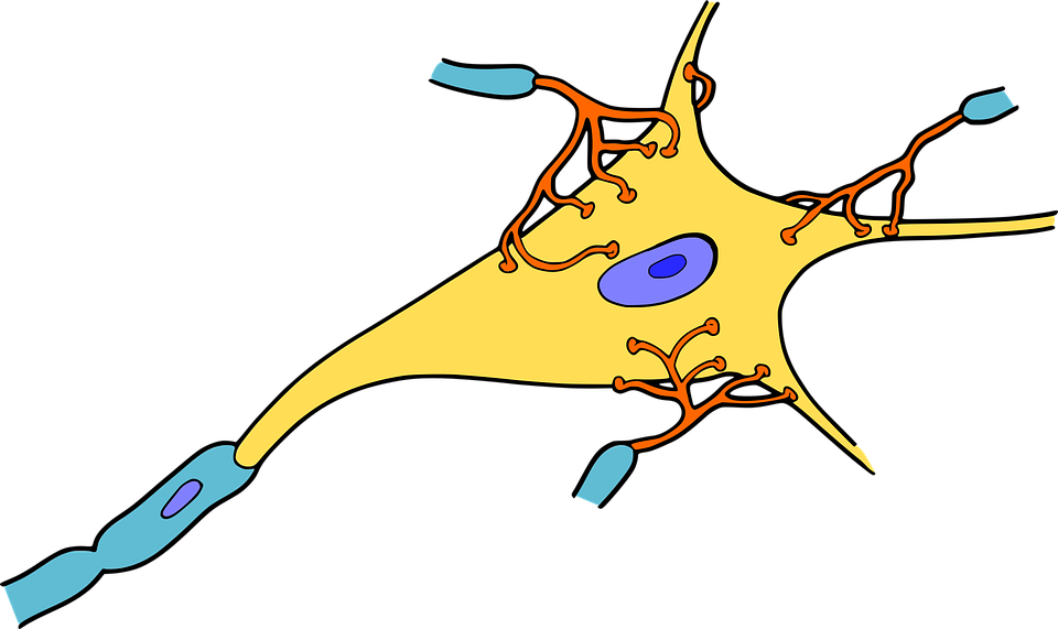 biology-1295127_960_720.png