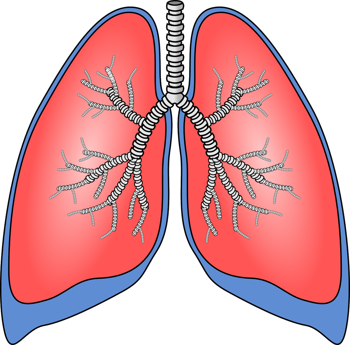 lungs-154282_1280-1200x1182.png