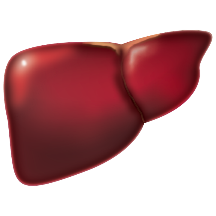 liver-4847972_960_720.png